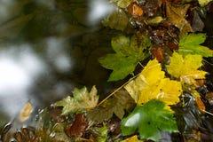 Sidorna i vattnet Fotografering för Bildbyråer
