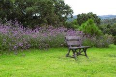Sidosikt av bänken i trädgård Fotografering för Bildbyråer