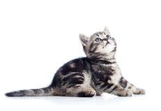 Sidosikt av den svarta kattkattungen Royaltyfri Fotografi