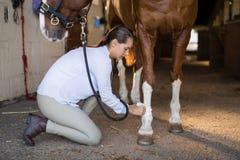 Sidosikt av den undersökande hästen för kvinnlig veterinär Royaltyfria Foton
