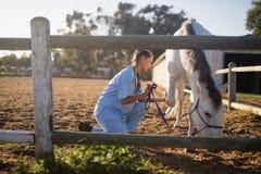Sidosikt av det hållande hästrepet för kvinnlig veterinär Arkivbild