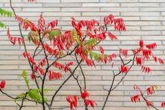 Sidosikt av trädet framme av den vita tegelstenväggen arkivfoton