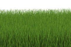 Sidosikt för grönt gräs som isoleras på vit Royaltyfri Fotografi