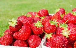 Sidosikt för packar med nya jordgubbar med gräsbakgrund Royaltyfri Fotografi