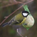 Sidosikten av den trädgårds- fågeln sätta sig på förlagematare Arkivfoto