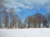 SidoZalgiriu skog i vinter, Litauen Royaltyfri Fotografi