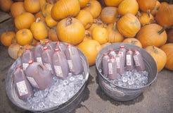 Sidra de maçã e abóboras para a venda, Vermont Foto de Stock Royalty Free