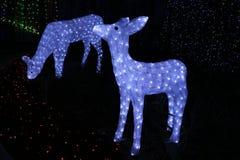 在堪培拉Sids和孩子光的圣诞节鹿显示 免版税库存照片