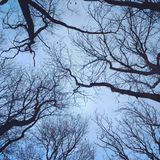 Sieć drzewa zdjęcia royalty free