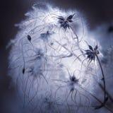 Sieć naturą fotografia royalty free