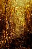 Sieć pająk przeciw wschodowi słońca Obrazy Royalty Free