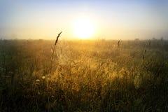 Sieć pająk przeciw wschodowi słońca w polu obraz stock