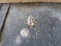 Sieć, pająk, tło, natura, makro-, przędzalnictwo, zbliżenie, czerwień, czerń zwierzęcy, duży, żółty, kolorowy, naturalny, przyrod Fotografia Royalty Free