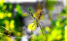 Sieć pająka i rosa pająka sieć Fotografia Royalty Free