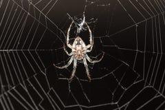sieć pająka ilustracyjna wektora Obrazy Stock