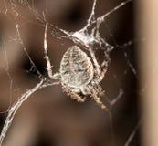 sieć pająka ilustracyjna wektora Zdjęcia Stock