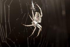 sieć pająka ilustracyjna wektora Zdjęcia Royalty Free