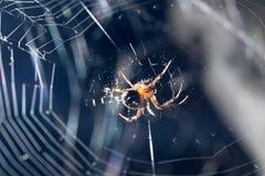 sieć pająka ilustracyjna wektora Makro- Zdjęcie Royalty Free