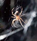 sieć pająka ilustracyjna wektora Makro- Obraz Stock