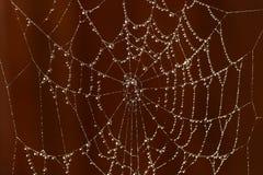 sieć pająka s Zdjęcia Stock