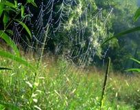 sieć pająka s Zdjęcia Royalty Free