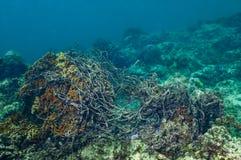 Sieć rybacka łapiąca na koral głowie Fotografia Royalty Free