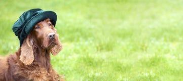 Sieć sztandar śmieszny pies z zielonym kapeluszem zdjęcia royalty free