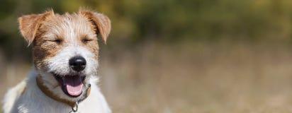 Sieć sztandar szczęśliwy uśmiechnięty zwierzę domowe psa szczeniak fotografia stock