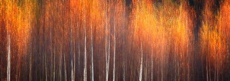 Sieć sztandaru jesienny textural sceniczny tło z ruch plamą, stonowaną w rocznika stylu obrazy stock