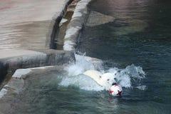 Sie-Bär Nika schwimmt für den Ball von Deutschland im Moskau-Zoo Lizenzfreie Stockbilder