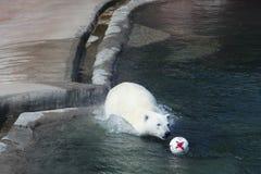 Sie-Bär springt für den Ball von Deutschland im Moskau-Zoo Lizenzfreies Stockbild
