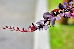 Sie ` bezüglich meines Zweigs, mein Baby, mein reizendes Kind lizenzfreies stockfoto