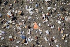 Sie verkauft Muscheln durch die Küste Stockfotos