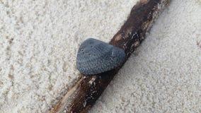 Sie wird auf Treibholz am Strand Stockbilder