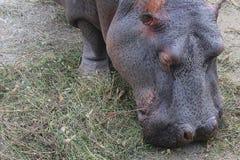Sie wird von Wartenahrung am Zoo gebohrt Stockfotos