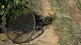 Sieb, das Kaffeebohnen vorwählt Auf dem Sieb des Bodens einer wählen Sie Kaffee vor lizenzfreie stockfotografie