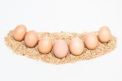 Sieben Eier mit Hülsen Stockbilder