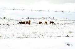 Sieben hinter dem Zaun lizenzfreies stockfoto