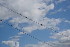 Sieben Schwalben sitzen auf Drähten stockfoto