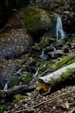 Sieben Seen - Yedigoller von Bolu die Türkei lizenzfreie stockfotos
