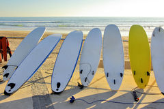 Sieben Surfbretter Stockfotografie