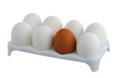 Sieben weiße Eier und ein Braun im Karton Lizenzfreies Stockfoto