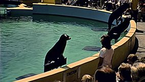 Siebziger Jahre Miamis Seaquarium stellen dar stock video footage