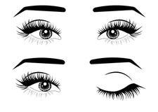 Sieci brązu kobiety Świezi oczy Pomys? dla wizyt?wek Druk dla koszulki ilustracji