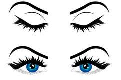 Sieci kreskówki żeński oko błękitny kolor z brwi ilustracją ilustracji