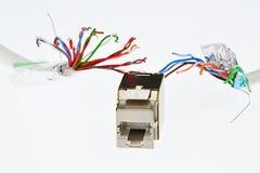 Sieci RJ45 UTP żeńska nasadka która patrzeje jak czułki potwór goni dwa UTP/STP kablami biały tło, Zdjęcia Royalty Free