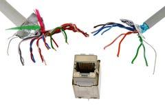 Sieci RJ45 UTP żeński gniazdkowy okładzinowy oddolny goni dwa UTP/STP kablami biały backgro, który patrzeje jak czułki potwór Zdjęcia Royalty Free