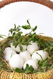Siedem białych jajek z zielenią rozgałęziają się w łozinowym bascet na słomie na białym tle obrazy stock