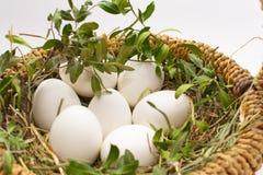 Siedem białych jajek z zielenią rozgałęziają się w łozinowym bascet na słomie na białym tle fotografia stock