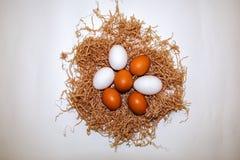 Siedem jajek kłaść w gniazdują zakończenie w górę fotografia royalty free